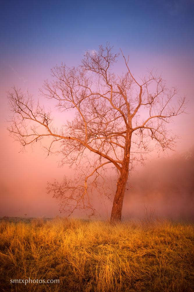 Sunrise at Spring Lake in San Marcos, TX
