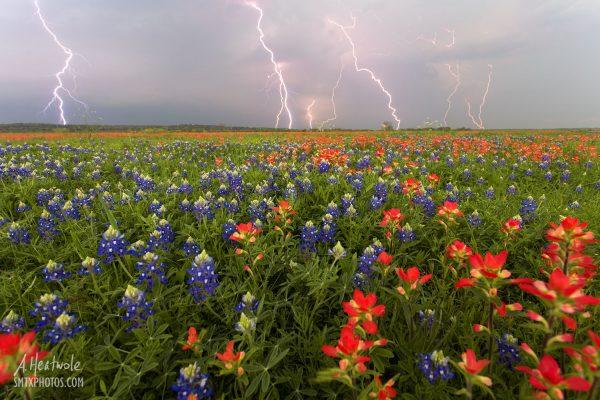 Lightning over a field of bluebonnets in San Marcos, TX