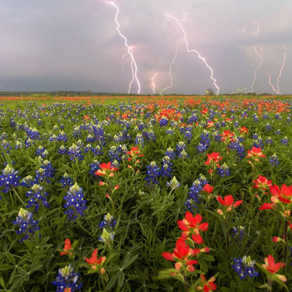 Lightning over a field of bluebonnets in San Marcos, TX