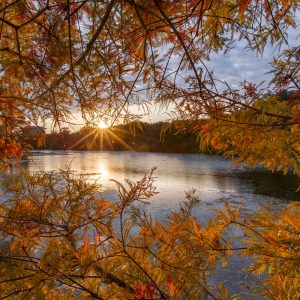 An autumn sunset at Spring Lake is framed by golden leaves.