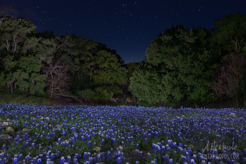 Spring Nights in Purgatory Creek Natural Area