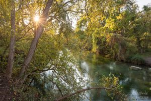 Golden Hour On The San Marcos River